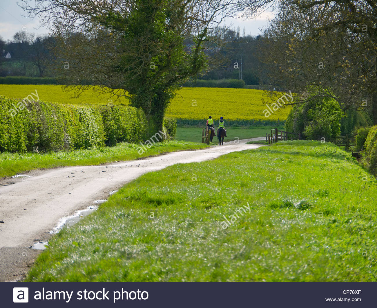 Horse Riders on Country Lane Northamptonshire England Distance Riding away - Stock Image