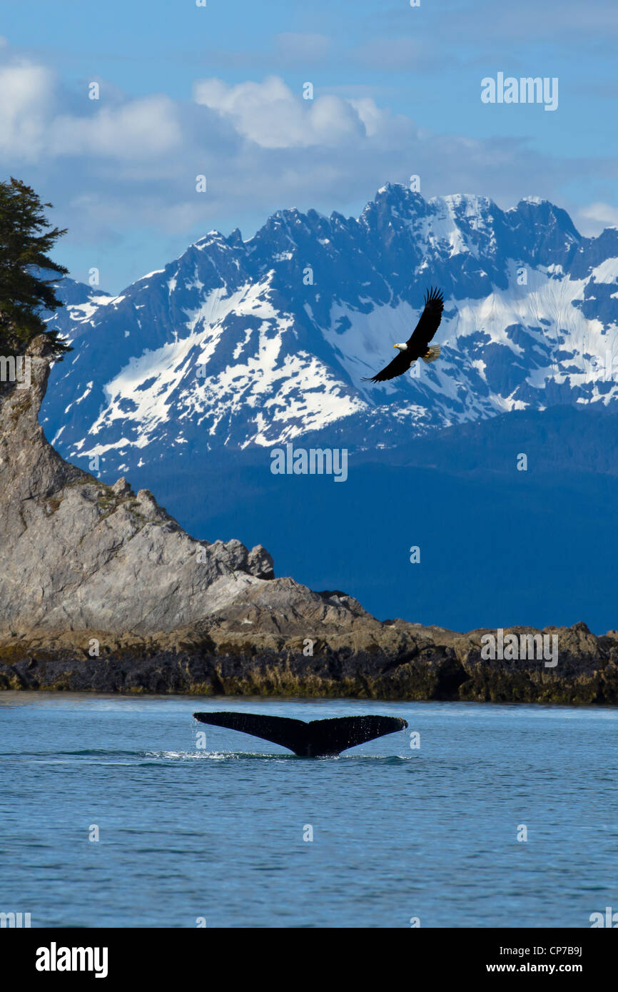 COMPOSITE: scenic view of Lynn Canal at Lion's Head with a Humpback fluke in the foreground and a Bald Eagle - Stock Image