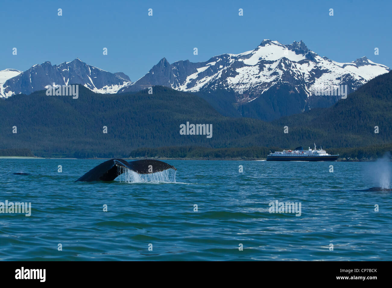 COMPOSITE: Humpback Whale fluking in Lynn Canal with a ferry in the distance, Inside Passage, Southeast Alaska, - Stock Image
