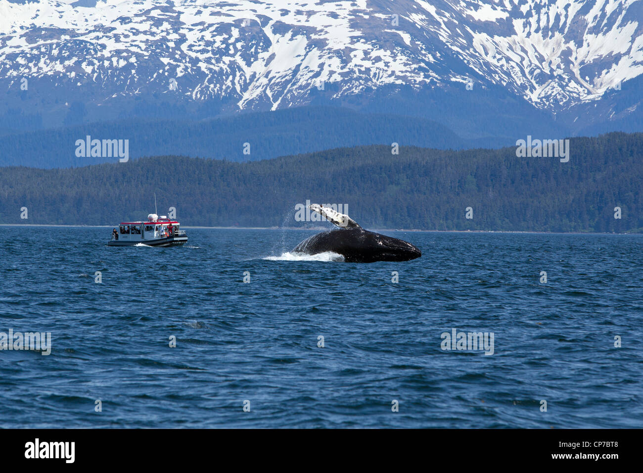 Tourists on wildlife tour watch as a Humpback Whale breaches in Lynn Canal, Inside Passage, Southeast Alaska, Summer - Stock Image