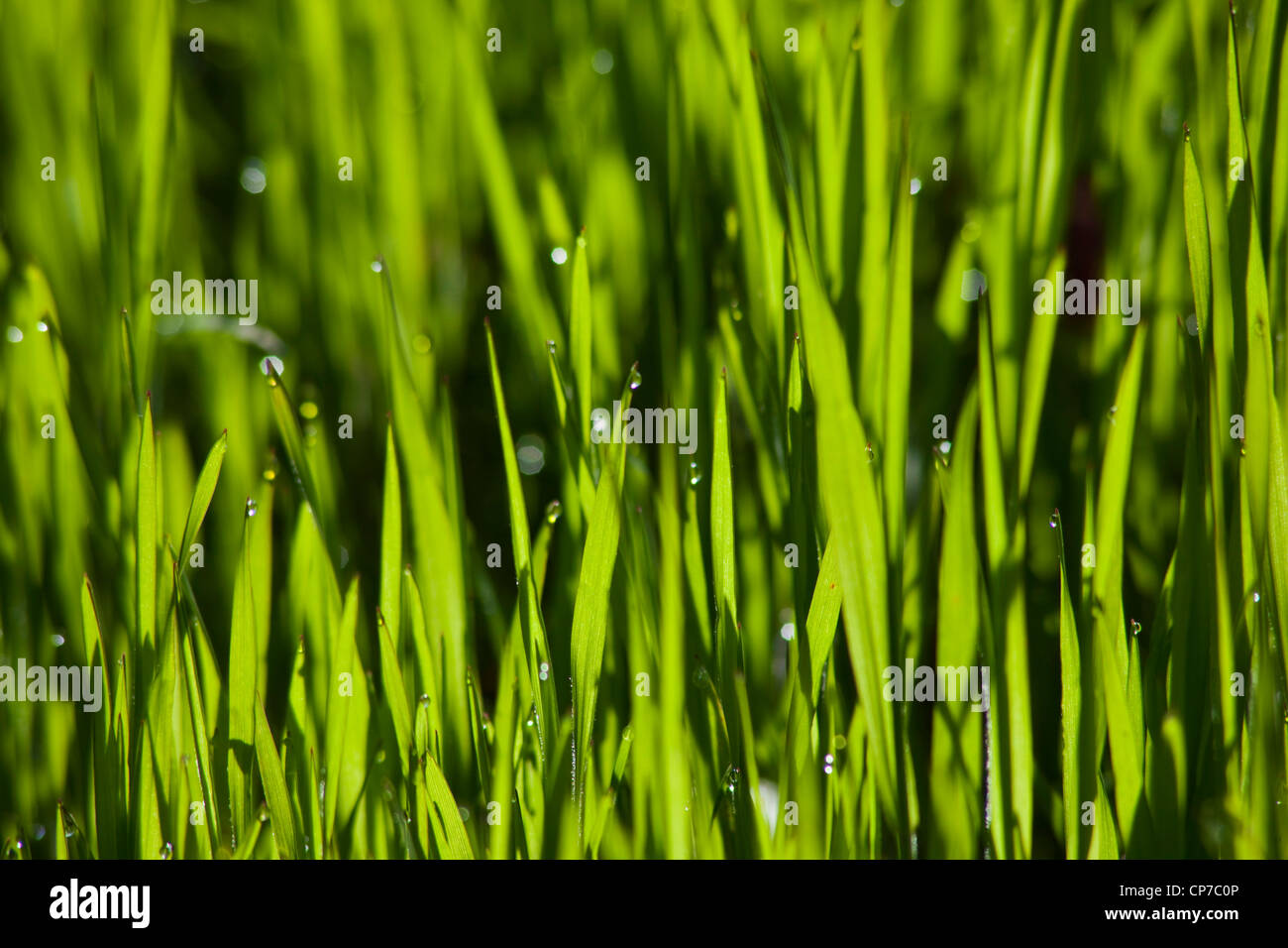 Grass, Lawn, Green, Green. - Stock Image