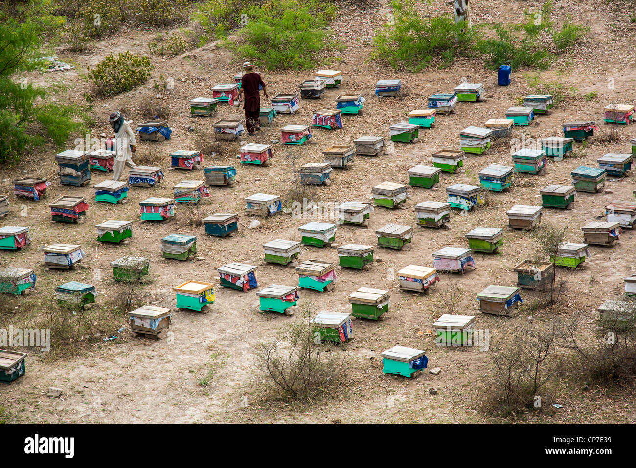 Bee hives in Punjab Province, Pakistan - Stock Image