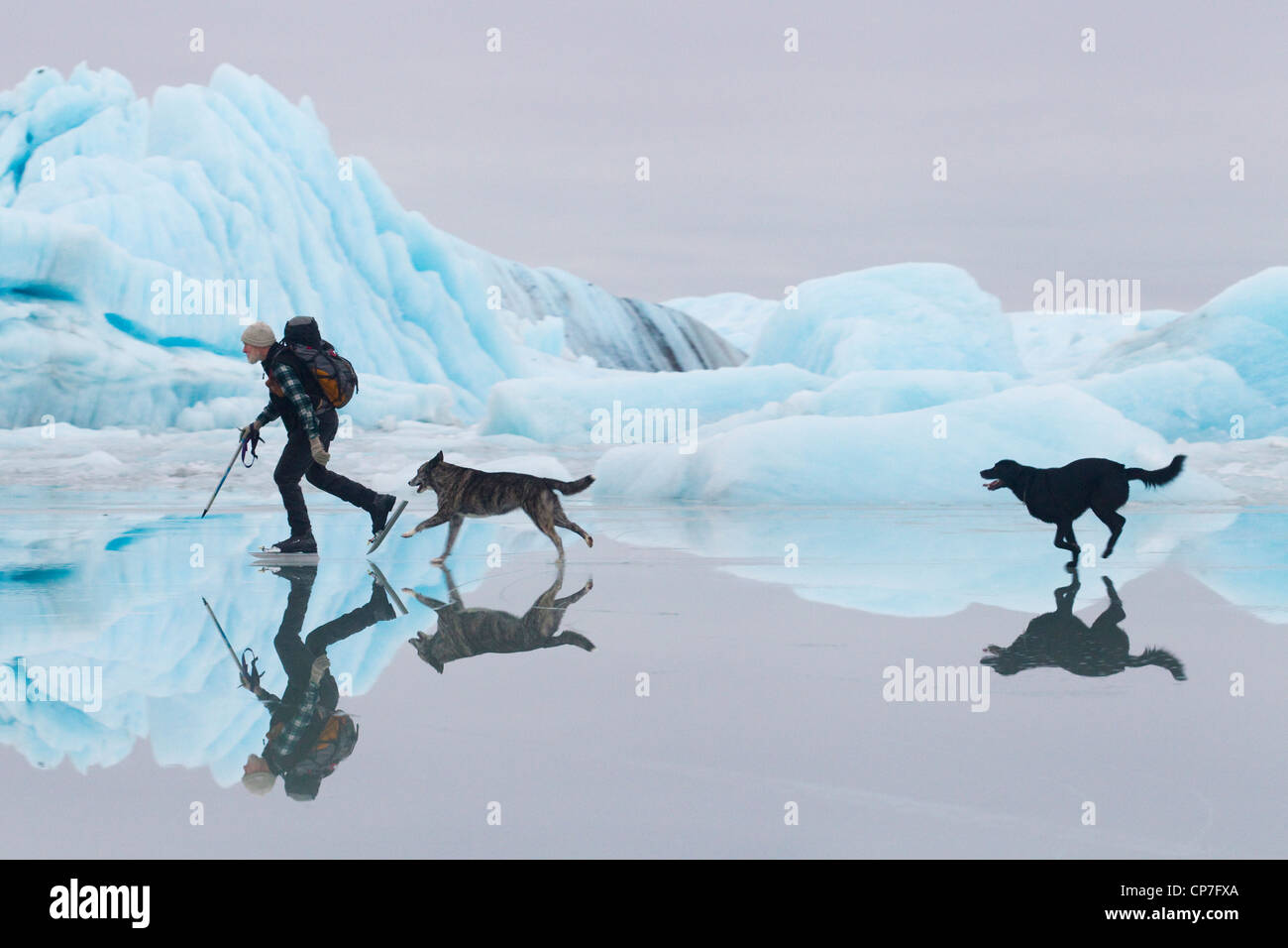 Man ice skating at Sheridan Glacier with two dogs with ice and icebergs in the background, Cordova, Alaska - Stock Image