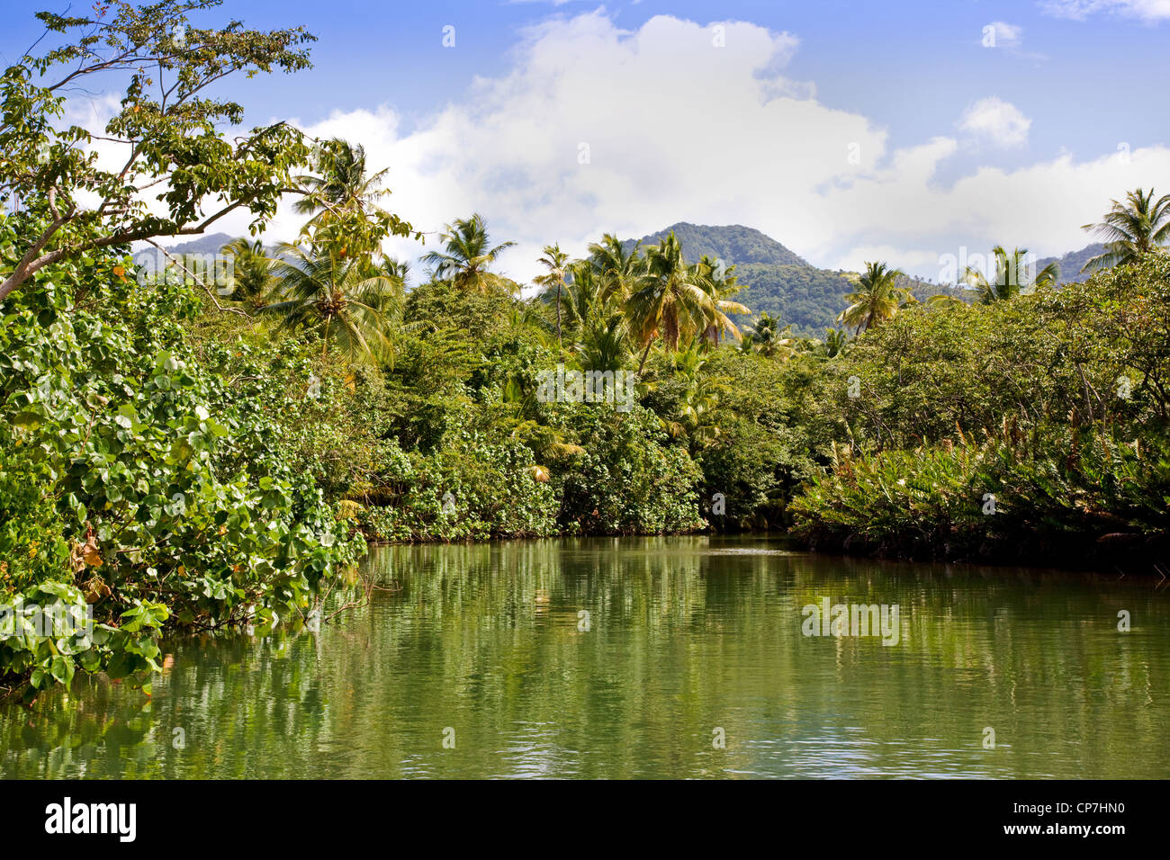 Tree lined estuary of Indian River near Portsmouth in Dominica West Indies - Stock Image