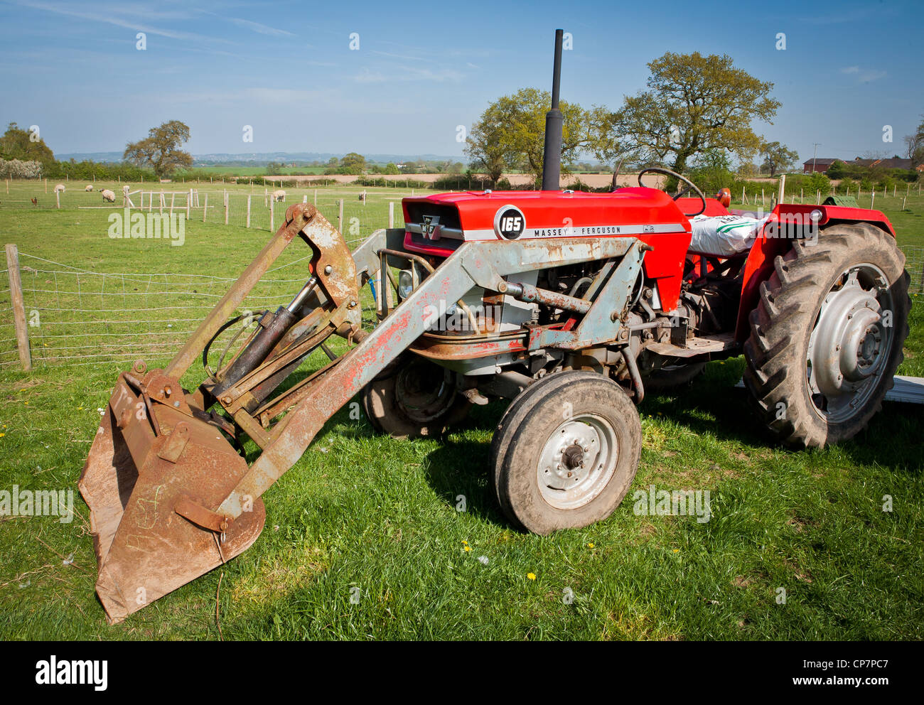 Massey Ferguson 165 Vintage Red Tractor in field with blue sky Stock