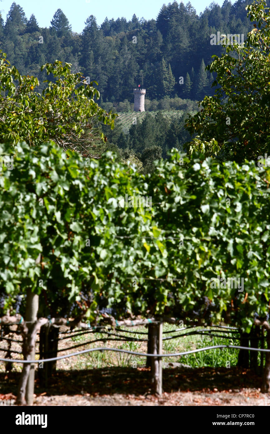 VINES AT CLOS PEGASE WINERY NAPA VALLEY VINEYARD 06 October 2011 - Stock Image