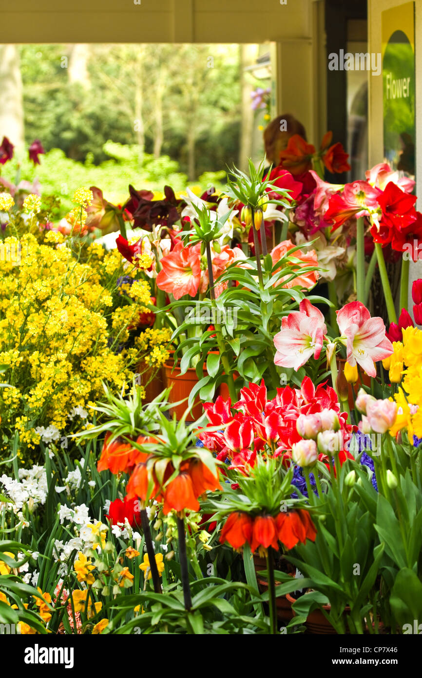 Flower shop with lots of beautiful flowers in spring stock photo flower shop with lots of beautiful flowers in spring izmirmasajfo