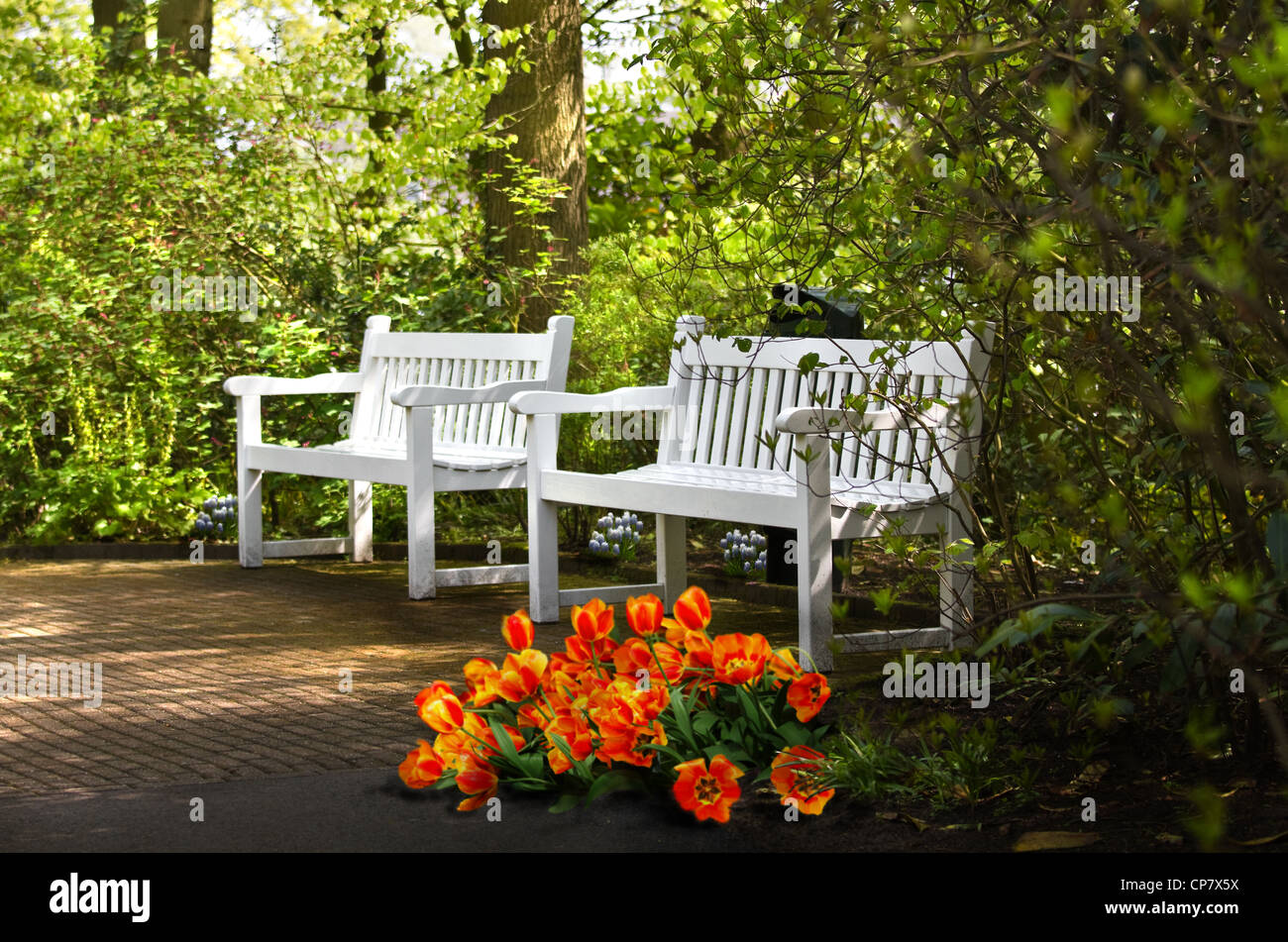 White benches and spring flowers under trees in park - Stock Image