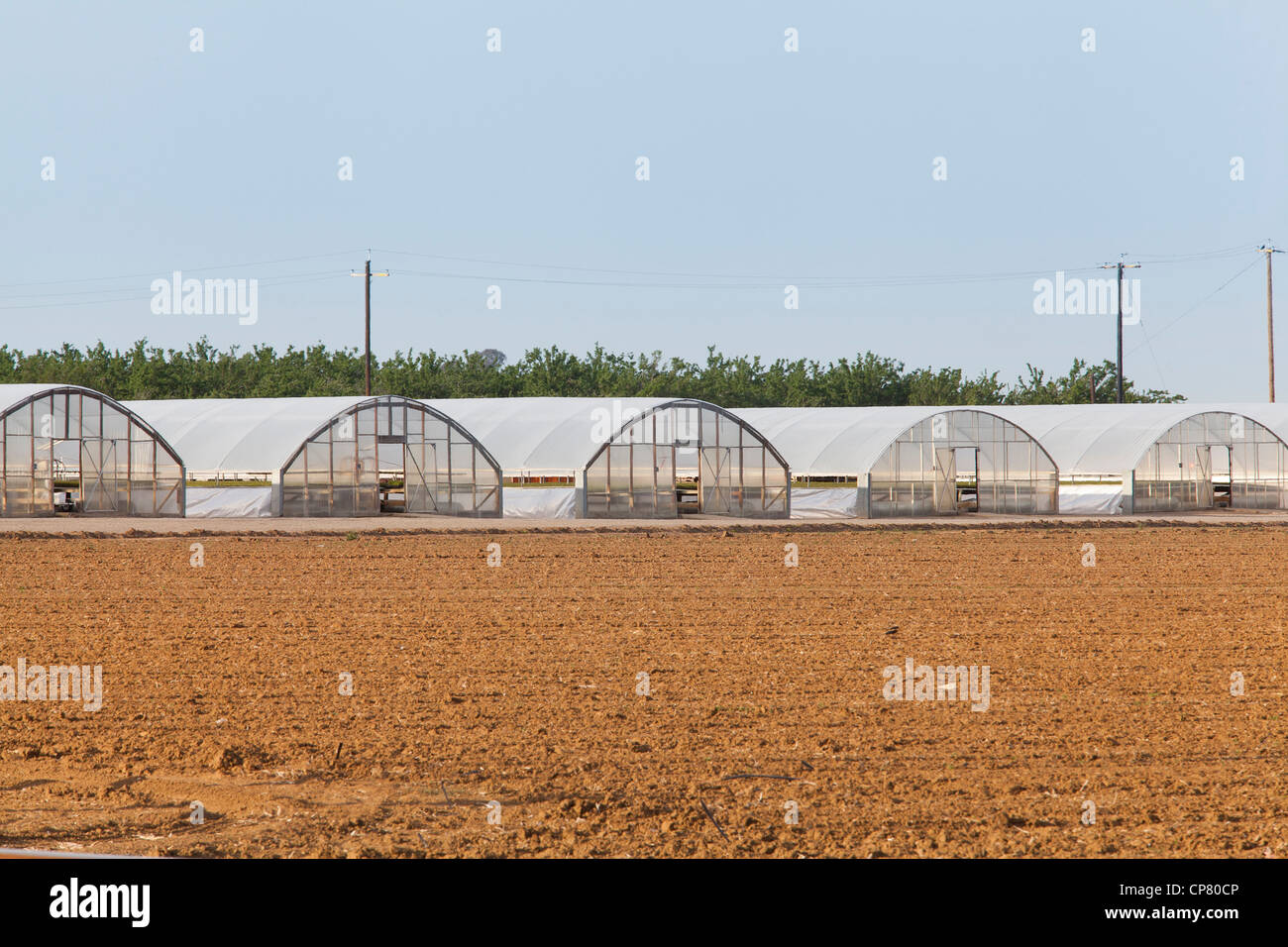 A row of greenhouses on farm - Stock Image