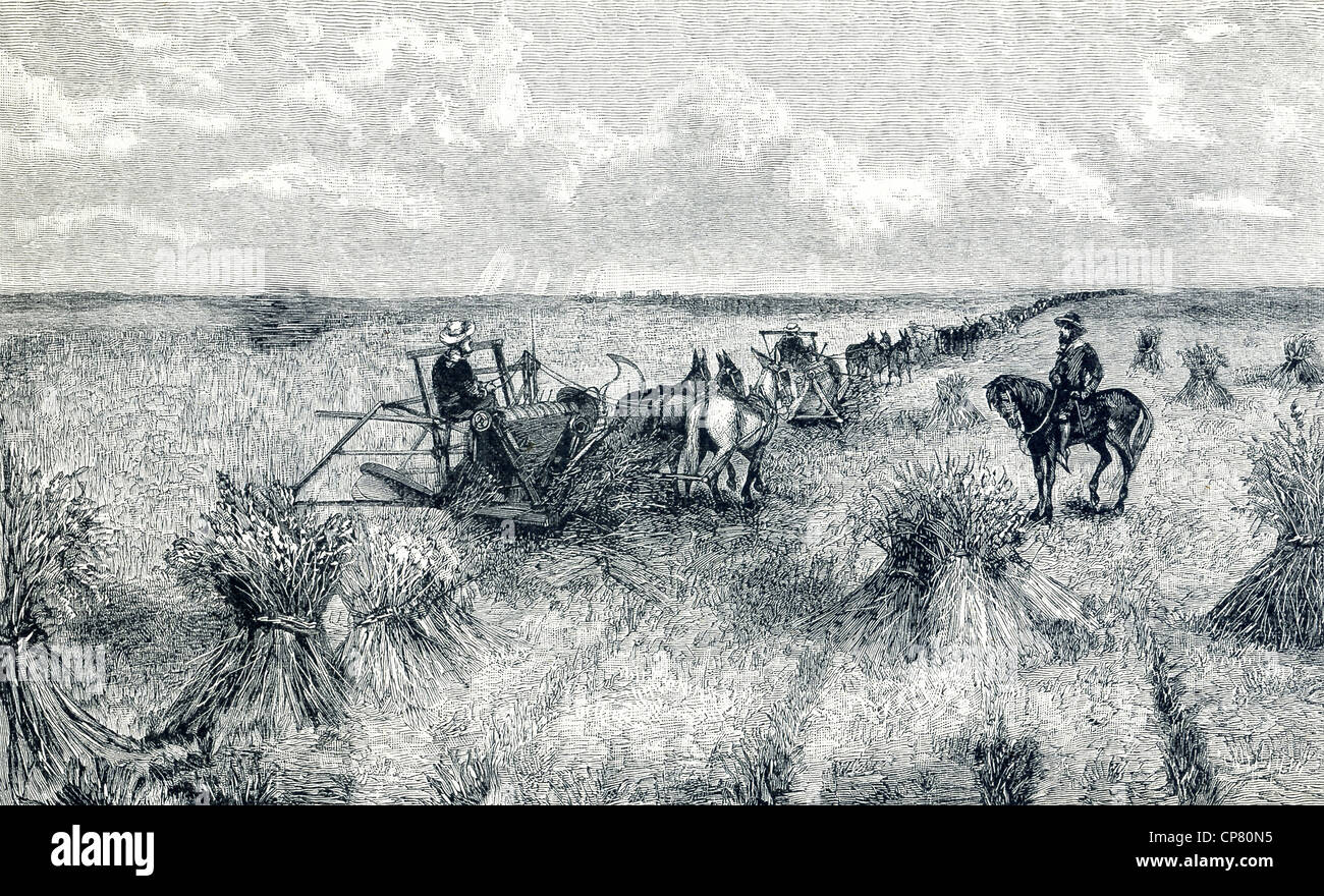 A bonanza farm was the phrase used in the 1870s in the U.S. to refer to very large farms that grew and harvested - Stock Image
