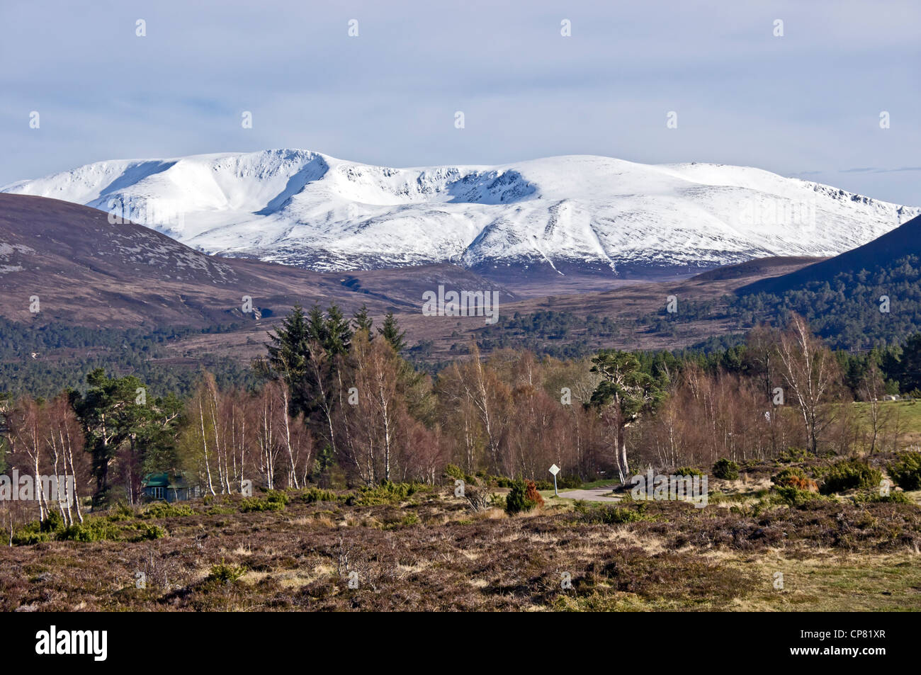 Snow clad Scottish mountain Braeriach in the Cairngorms National Park seen from  Rothiemurchus Highland Scotland - Stock Image