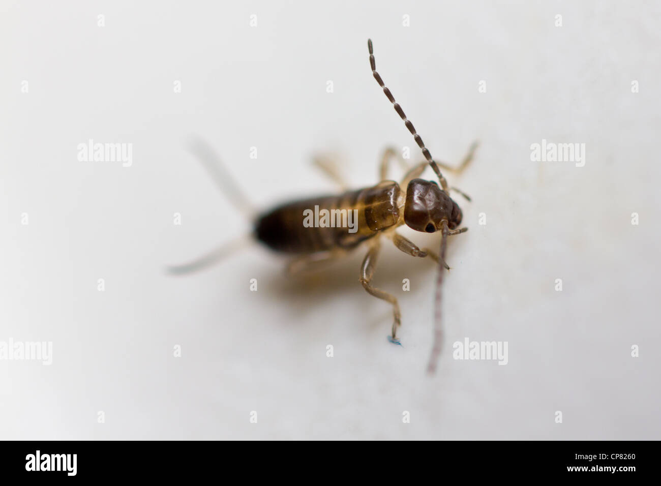 Macro crawling insect in sink - Stock Image
