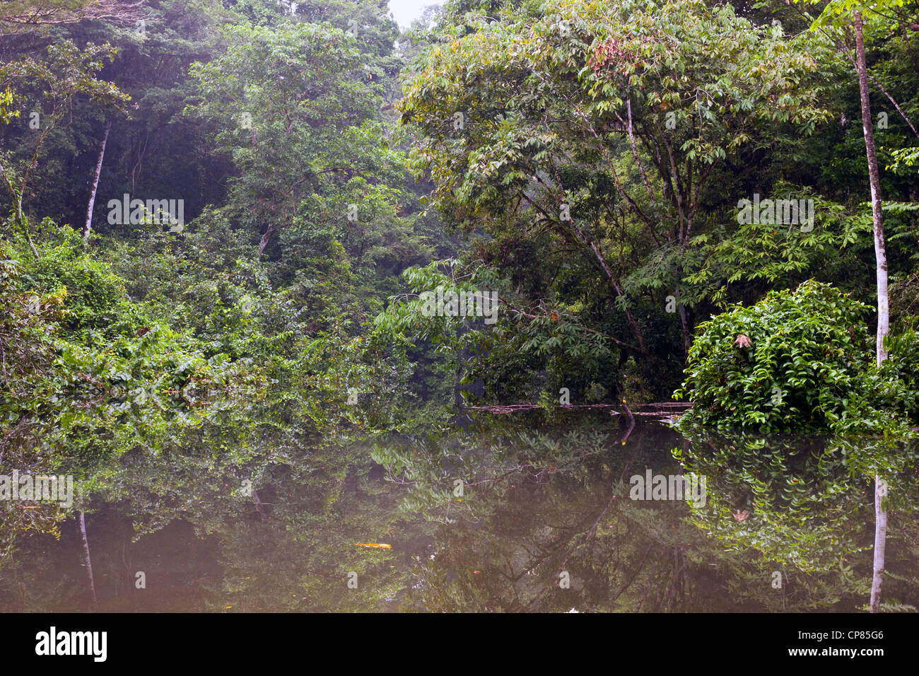 An oxbow lake (an old meander cut off from the main river) beside the rio Tiputini in the Ecuadorian Amazon - Stock Image