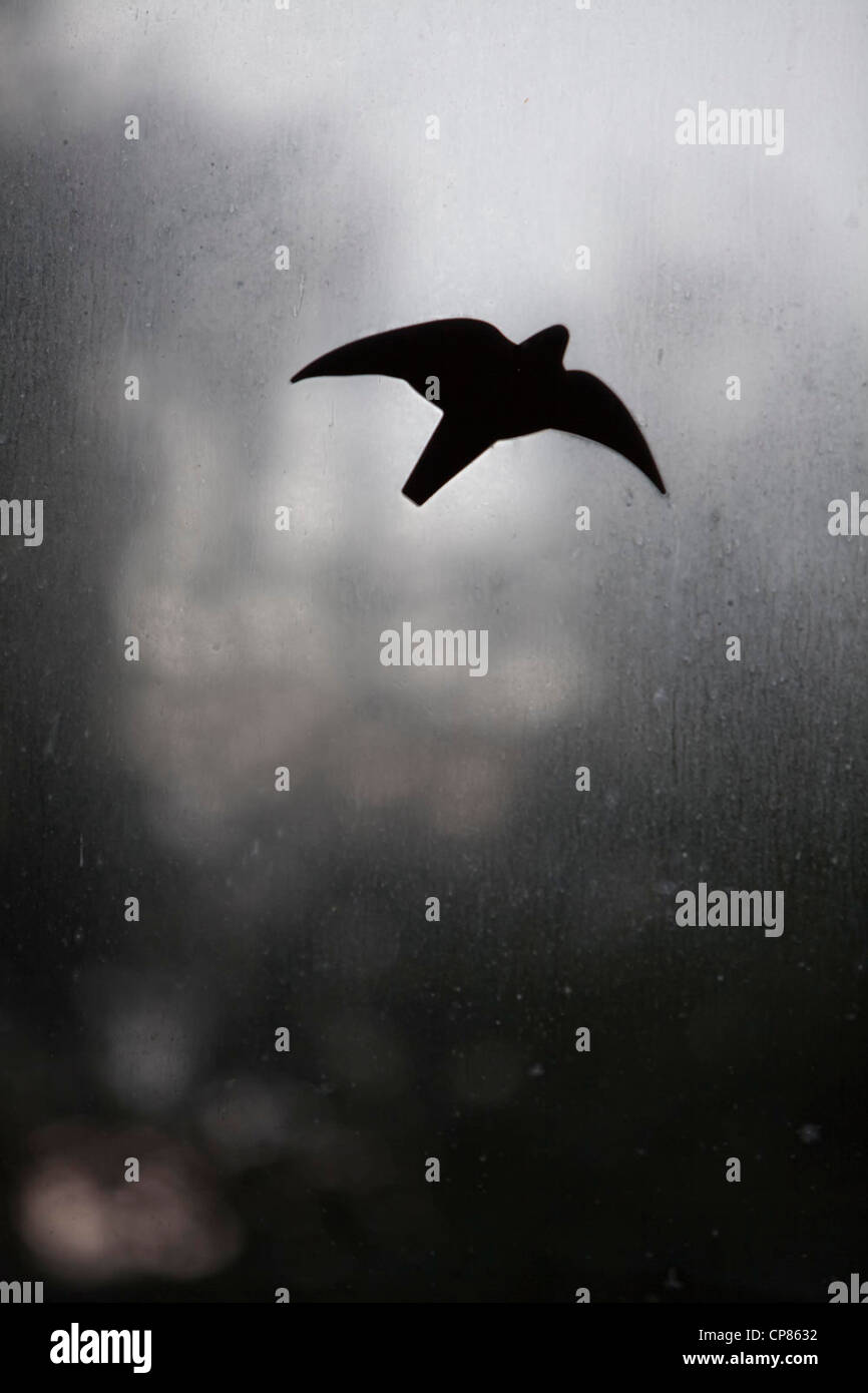 Ein Vogel aus schwarzer Folie klebt auf einer schmutzigen und beschlagenen Glasscheibe Stock Photo