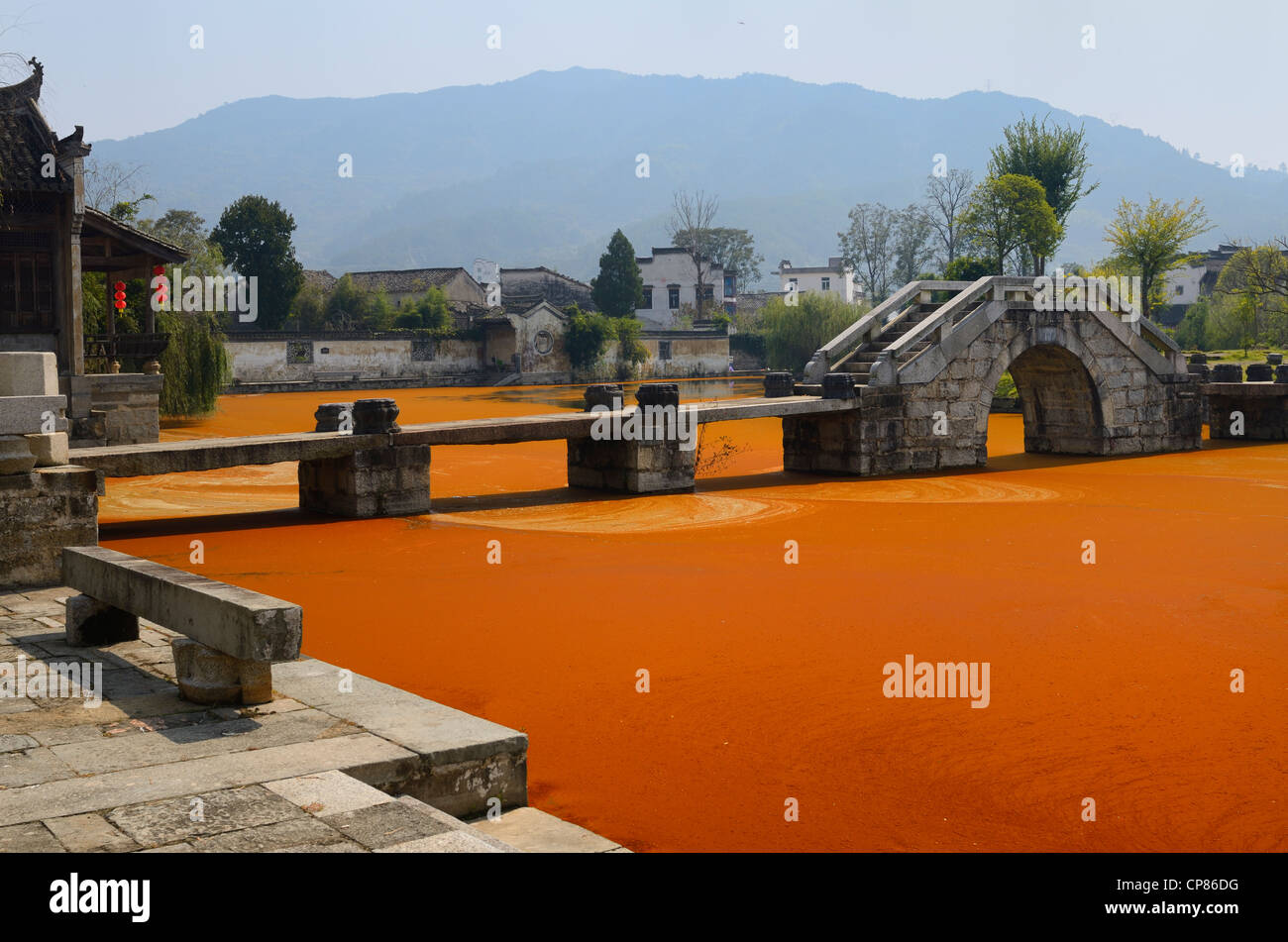 Bright red algae scum on Longxi river with stone bridge in Chengkan village Huangshan Peoples Republic of China - Stock Image