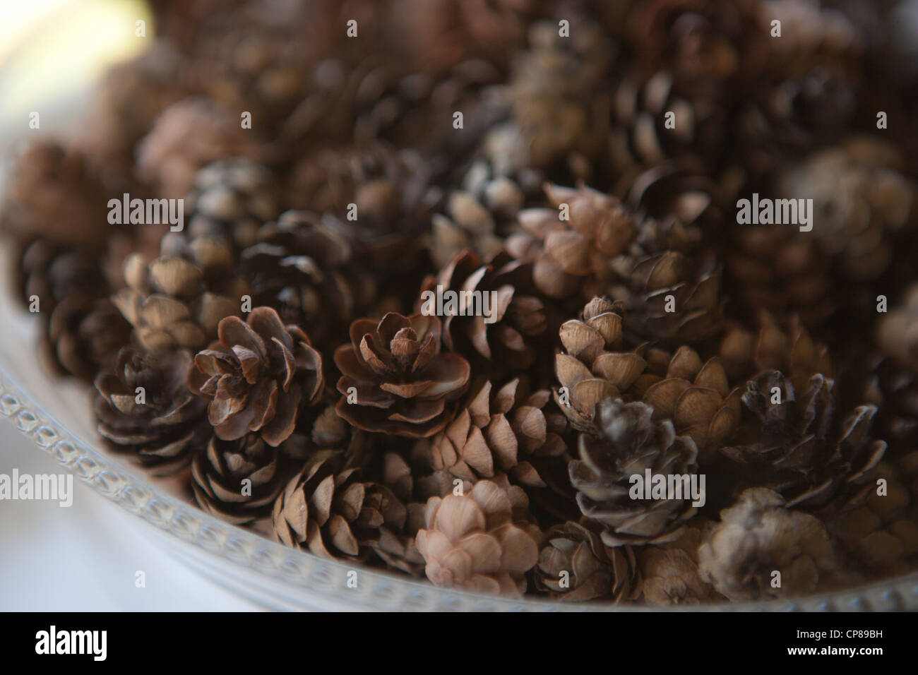 Close up of small pinecones in a bowl. - Stock Image