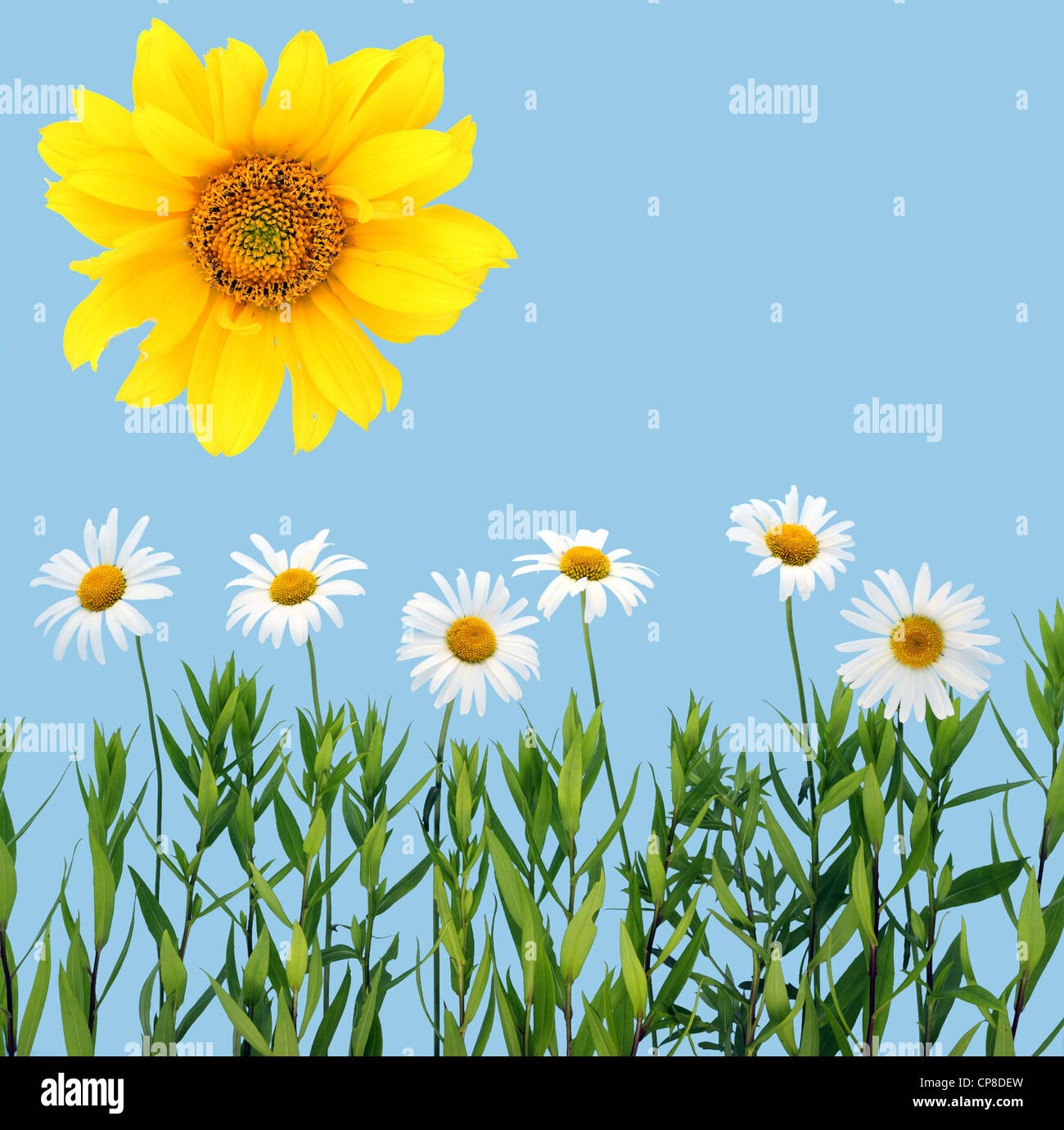 Children's collage of a camomile and sunflower. Isolated on cyan. - Stock Image