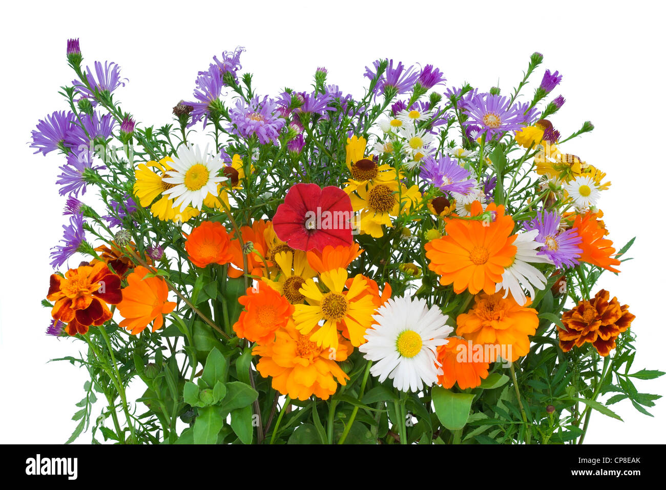 October Birthday Flower Stock Photos October Birthday Flower Stock