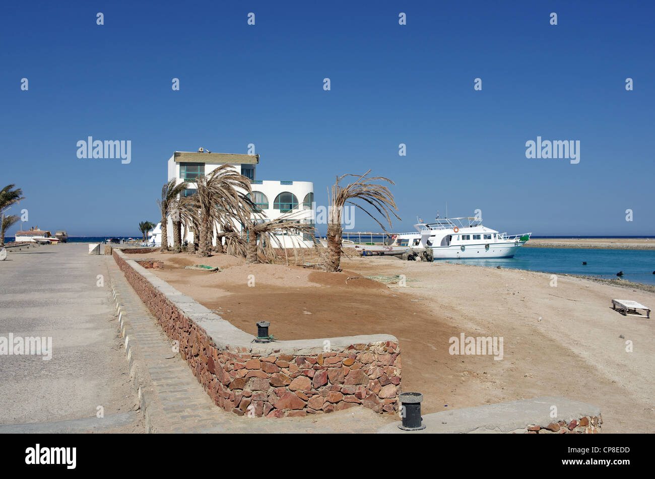 Dried and wilted a group of palm trees stand decimated by drought on the coast of the Red Sea, white ship. Hurghada, - Stock Image