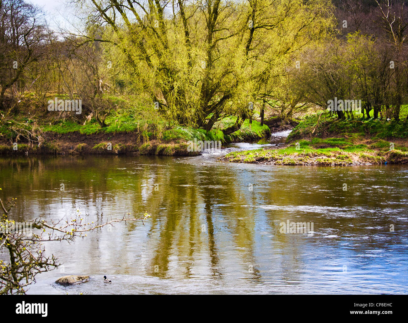 Dinckley Brook meets the mighty Ribble - Stock Image