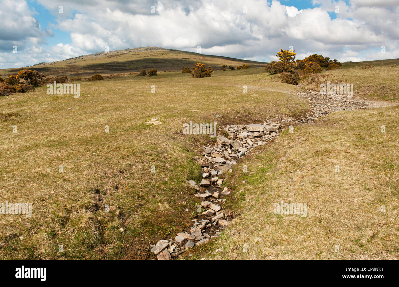 Dry stony stream bed on Dartmoor during very dry weather, Devon, UK - Stock Image