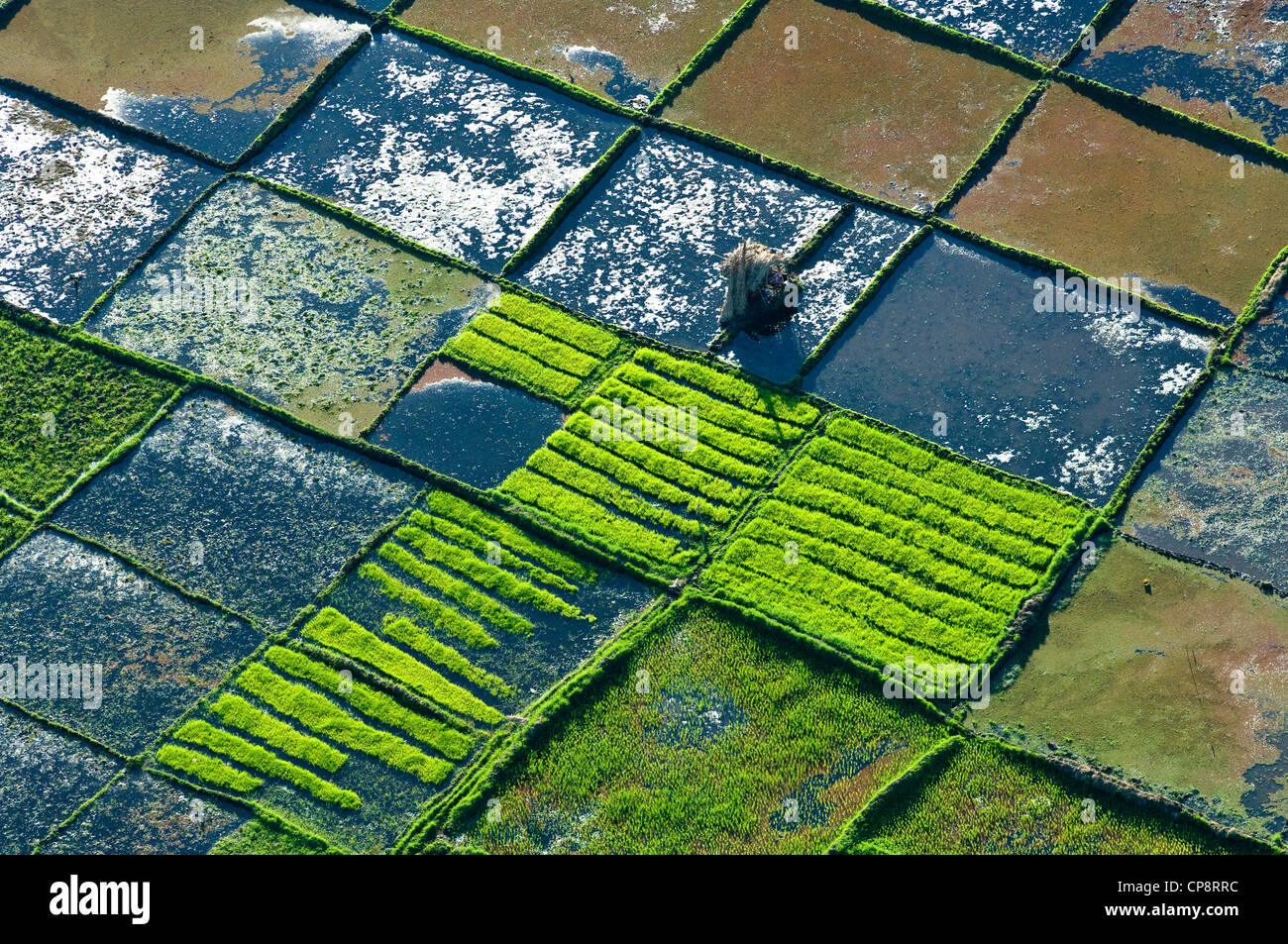 Shelter hut in paddy rice fields, aerial view, Arusha Region, Tanzania - Stock Image
