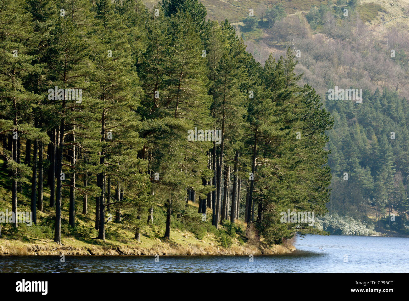 trees next to a lake with hill - Stock Image