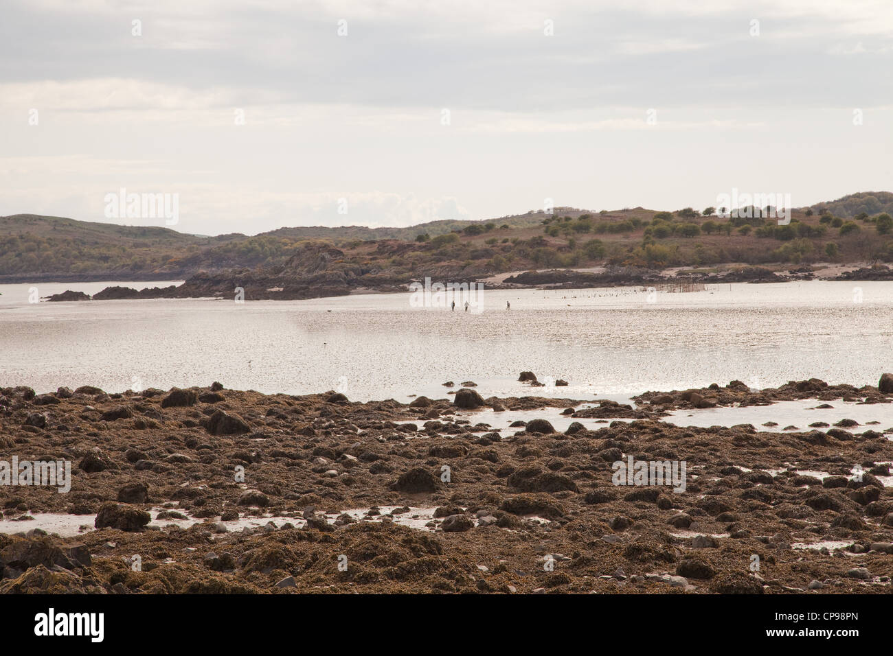 Solway firth southern Scotland, near the village of Rockliff. Stock Photo