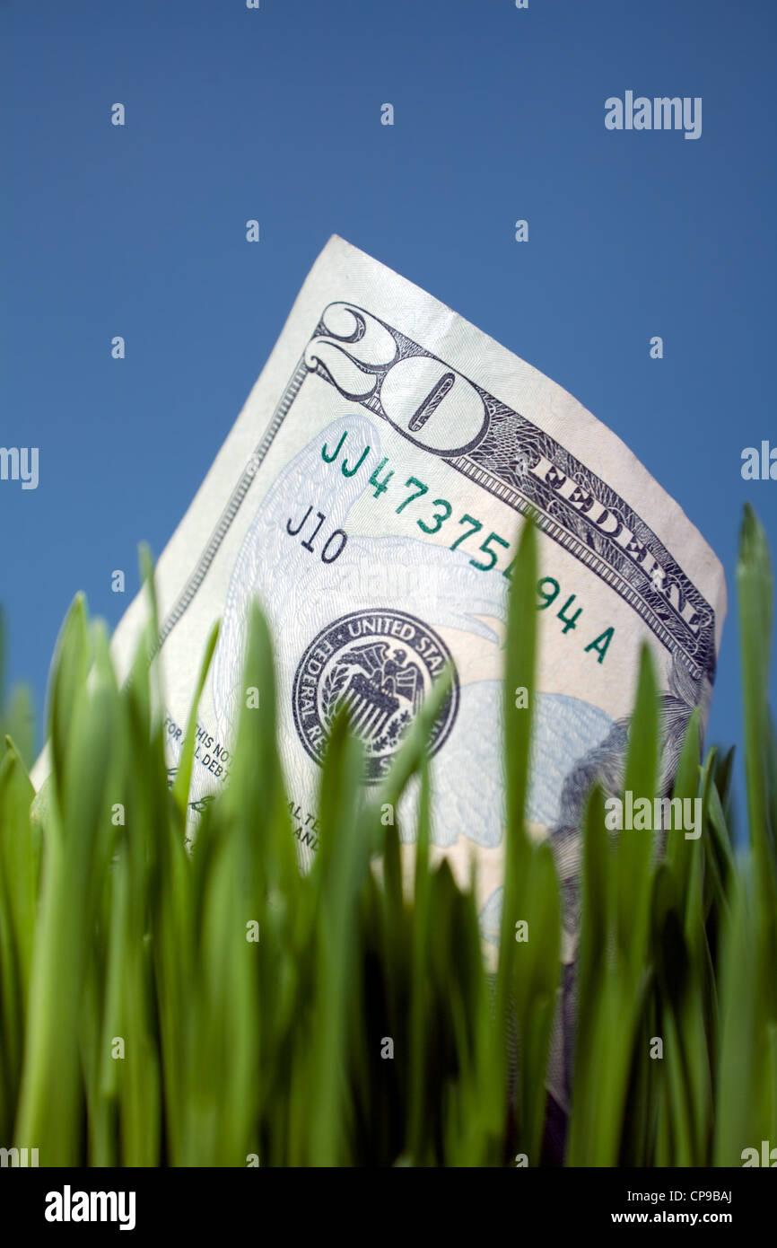 Twenty Dollar Bill Growing in Grass - Stock Image