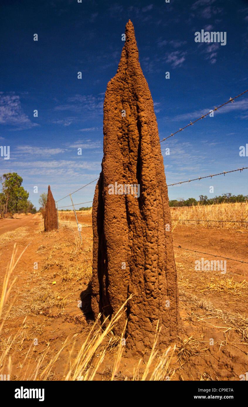 unusual fence post, outback Australia - Stock Image