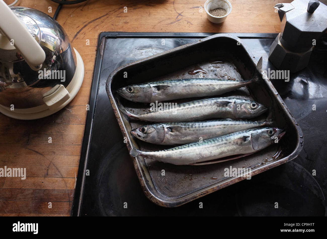 Freshly caught and gutted Cornish Mackerel ready for cooking - Stock Image