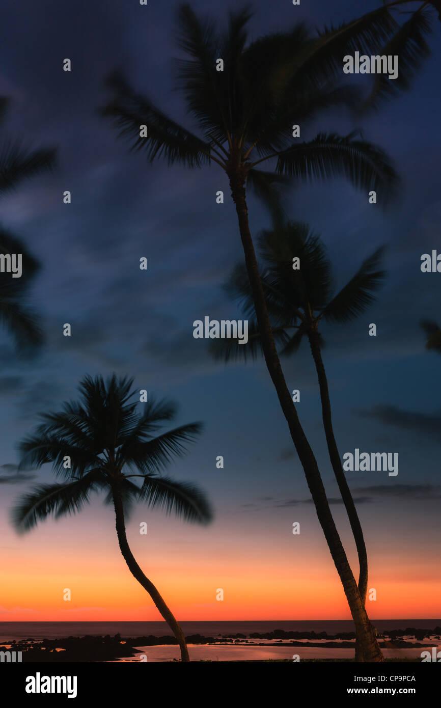Palmtrees at Sunset at Pu'uhonua o Hōnaunau National Historical Park - The Big Island, Hawaii - Stock Image