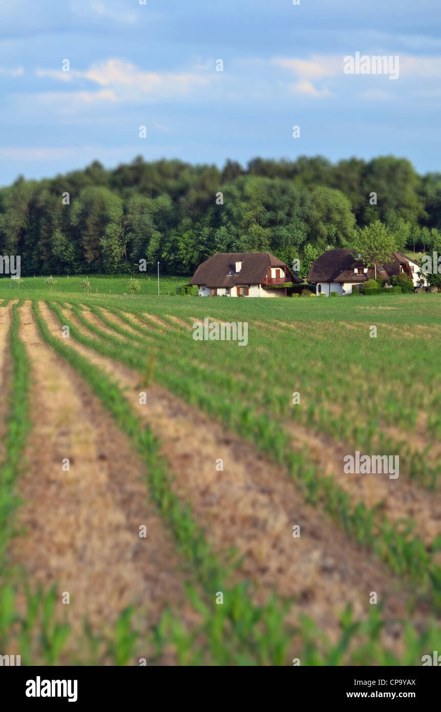 Beautiful farmhouse with field in foreground. With Tilt shift toy effect. - Stock Image