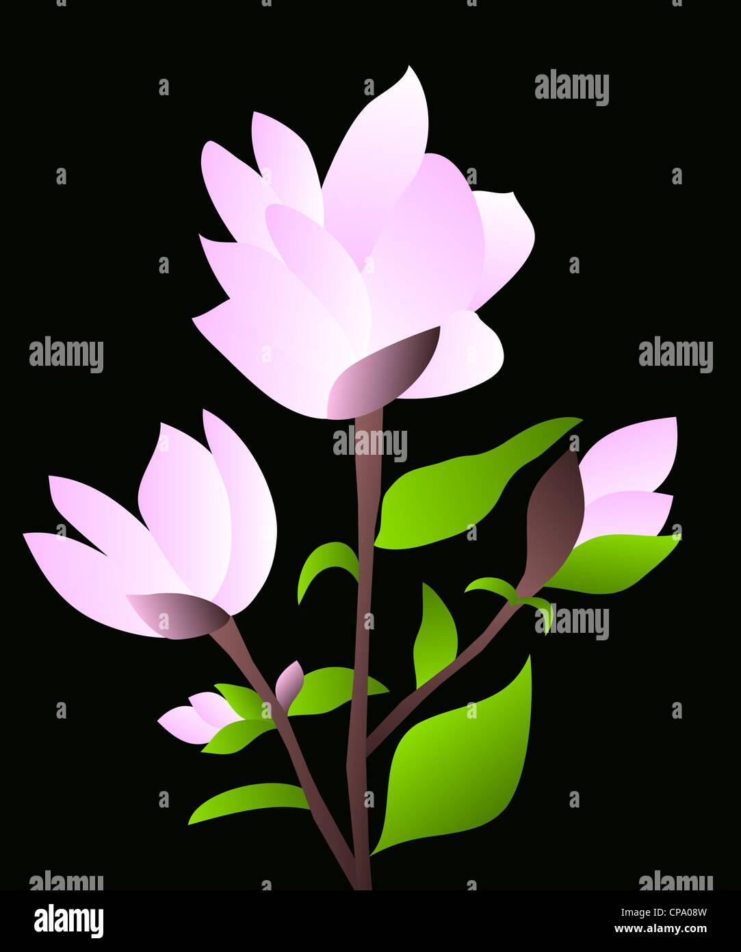 Pink magnolia flowering plant illustration on black background Stock Photo