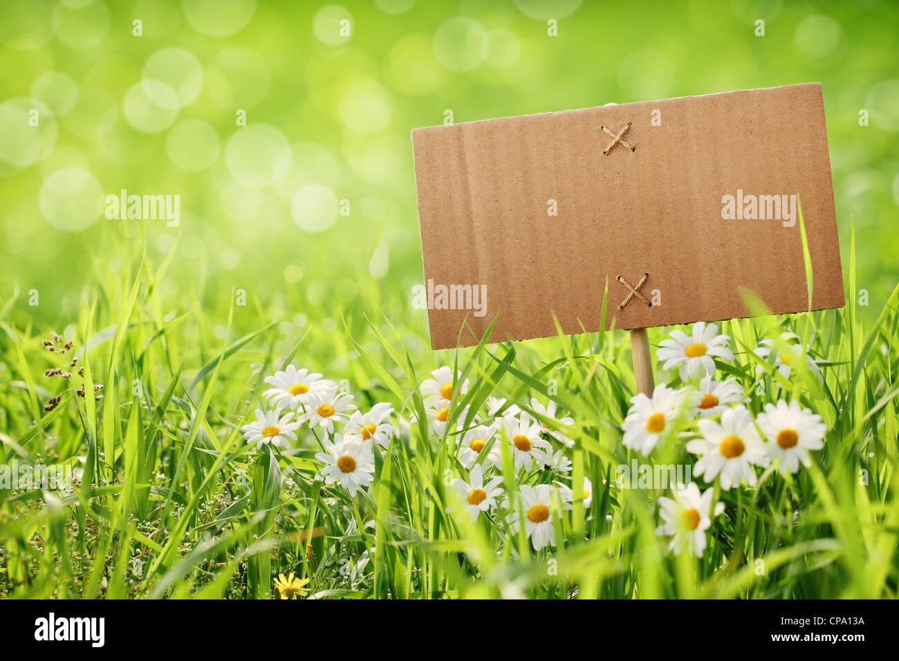 blank billboard on meadow with daisy flower - Stock Image