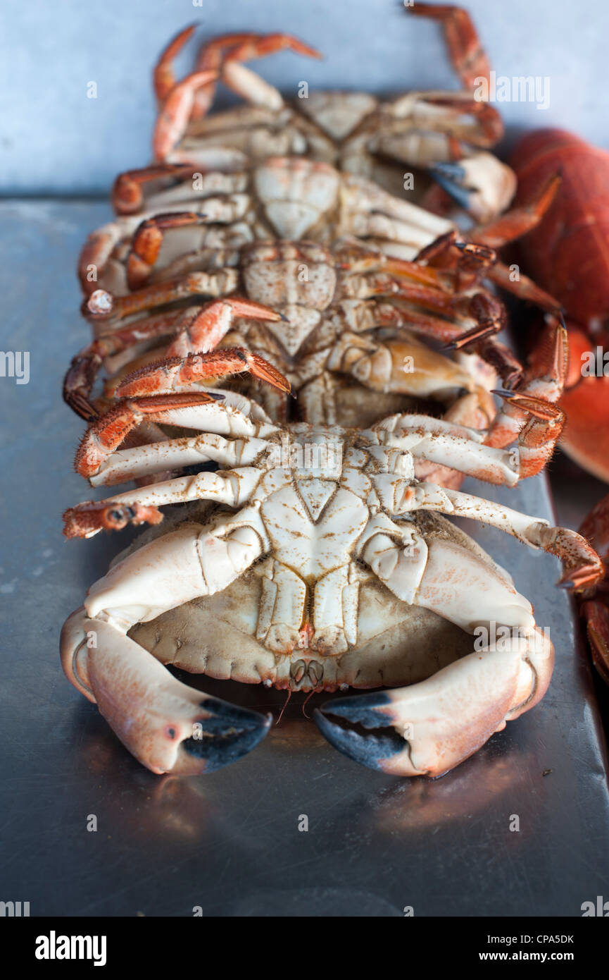 Cooked crabs for sale on a fish stall at Aldeburgh Suffolk UK - Stock Image