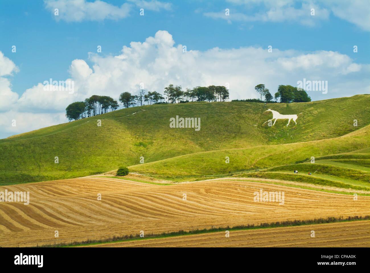 white chalk horse figure at Cherhill  down Wiltshire England UK GB EU Europe Stock Photo