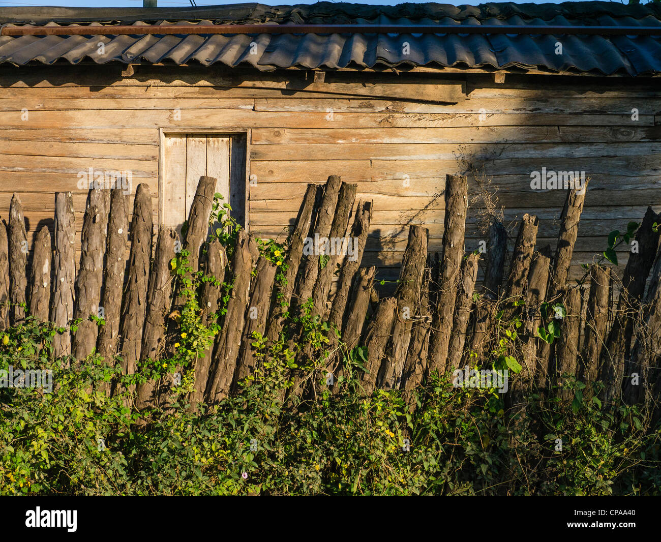 A rustic, primitive wooden fence made of tree branches in Viñales, Cuba. - Stock Image
