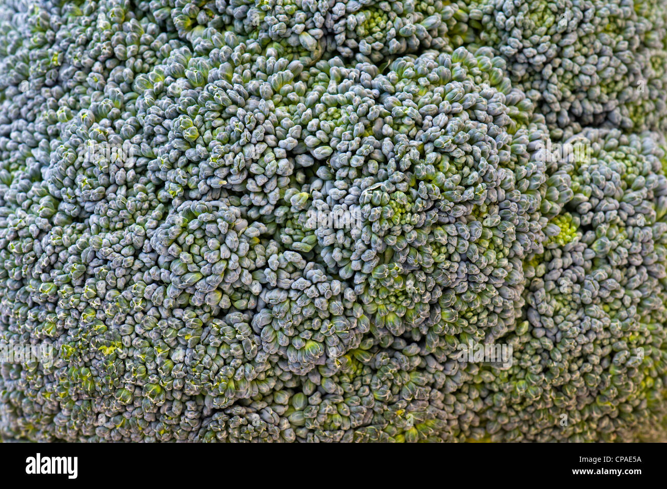 Close up of fresh uncooked broccoli on chopping board Stock Photo