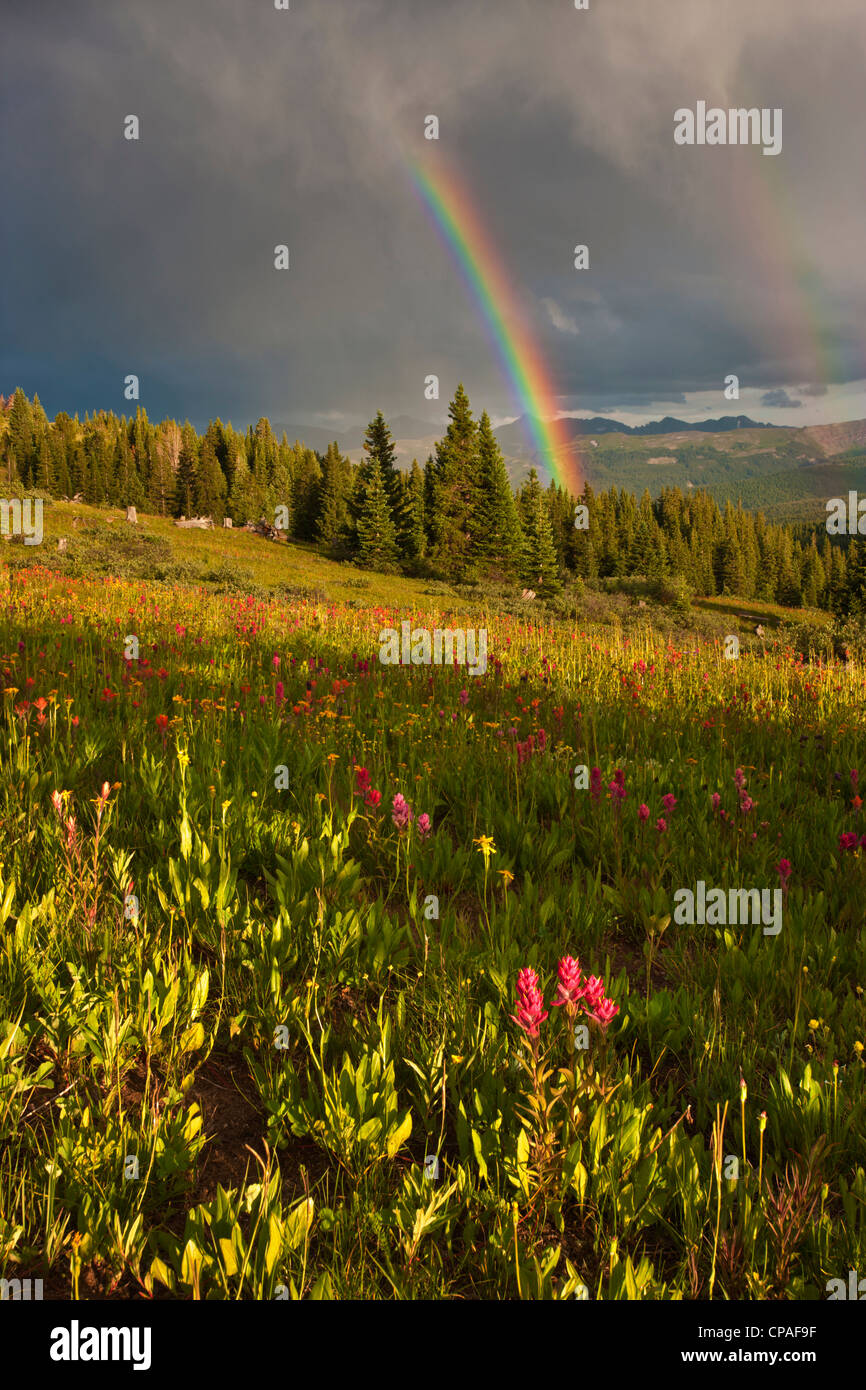 USA, Colorado, Shrine Pass. A sunset rainbow over a wildflower-filled meadow - Stock Image