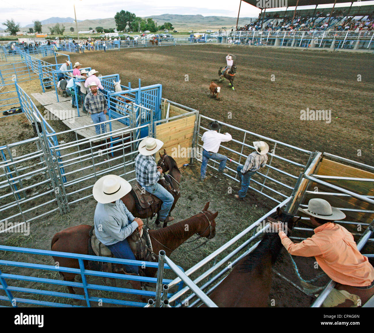 USA, Idaho, Fort Hall. Steer roping event of the rodeo held during the annual Shoshone-Bannock Festival. - Stock Image
