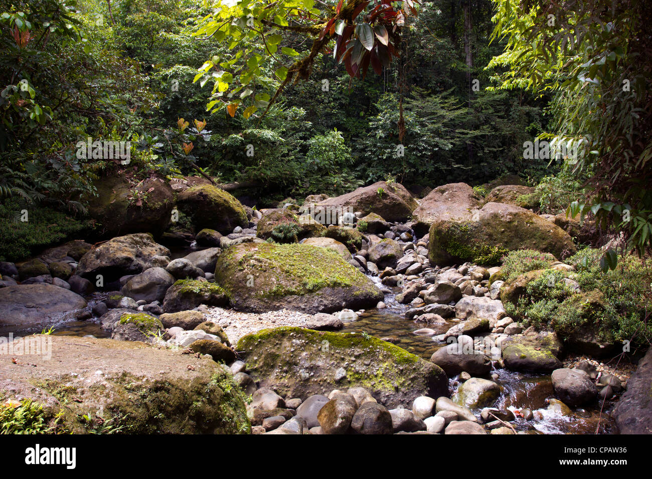 Gully in rainforest in the Choco Biological Region in North West Ecuador - Stock Image