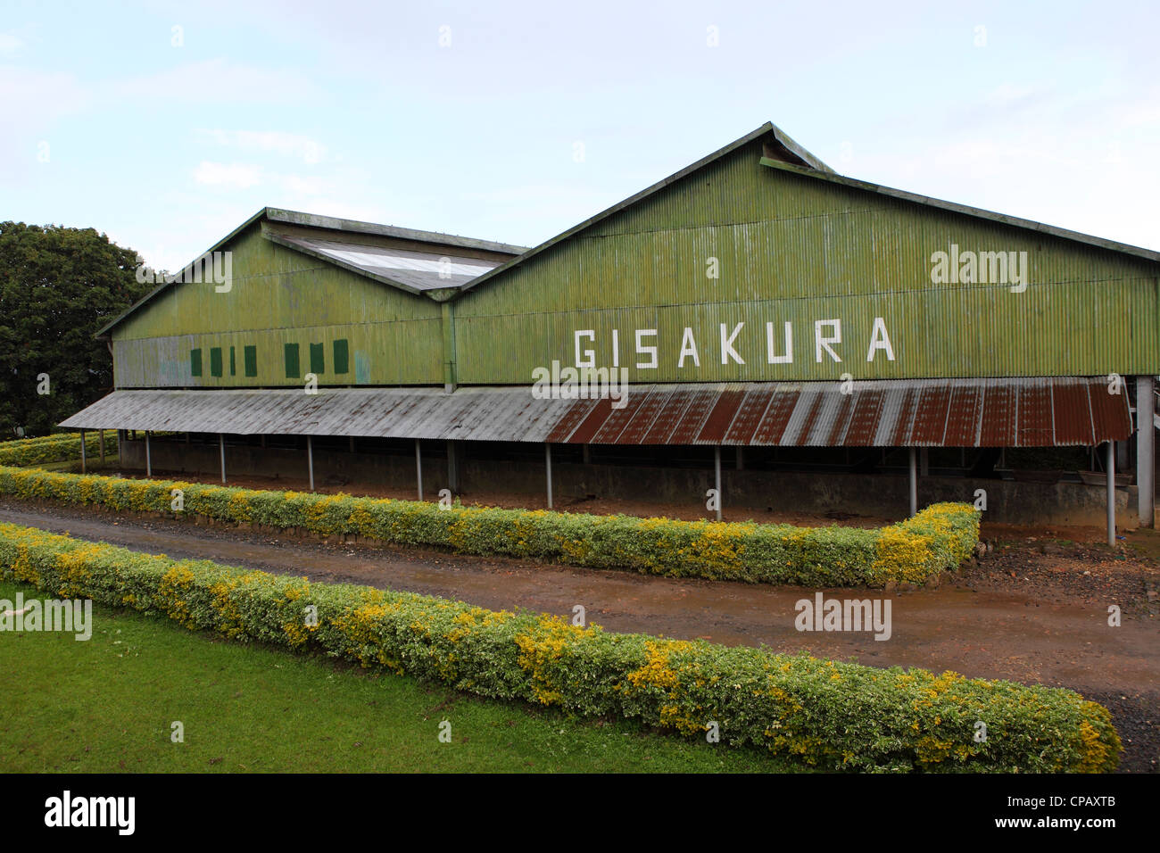 The Gisakura Tea Factory in Rwanda. Rwanda produces a number of high quality teas, much of which is exported. - Stock Image