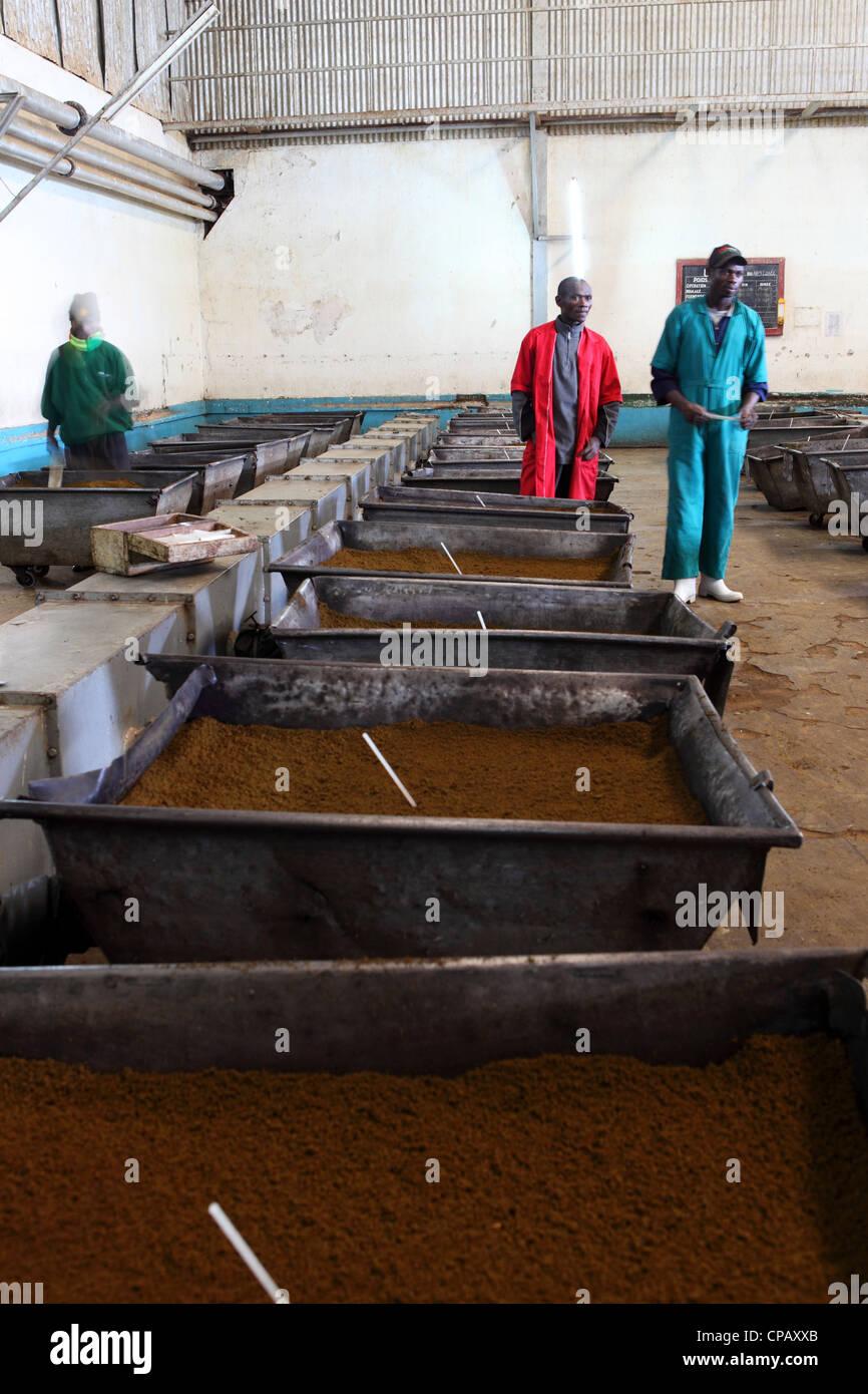 Workers look at carts full of tea during the tea production process at the Gisakura Tea Factory in Rwanda. - Stock Image