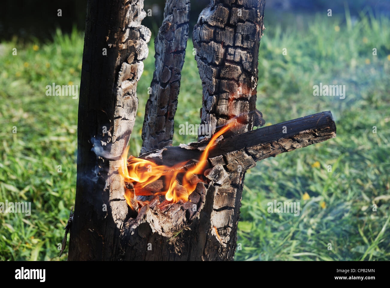 smouldering tree trunk burned out in the middle - Stock Image