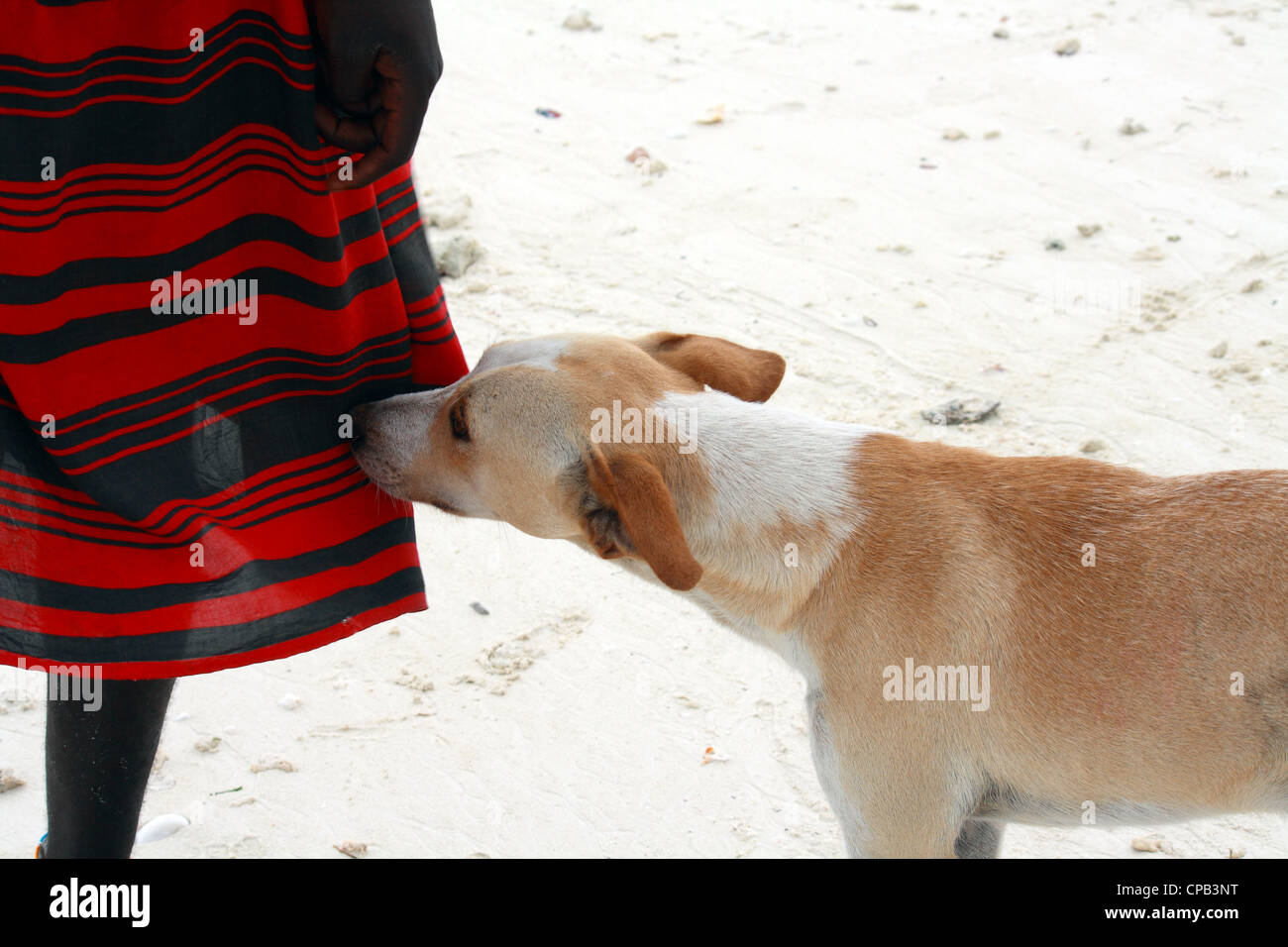 The dog is man's best friend - Stock Image
