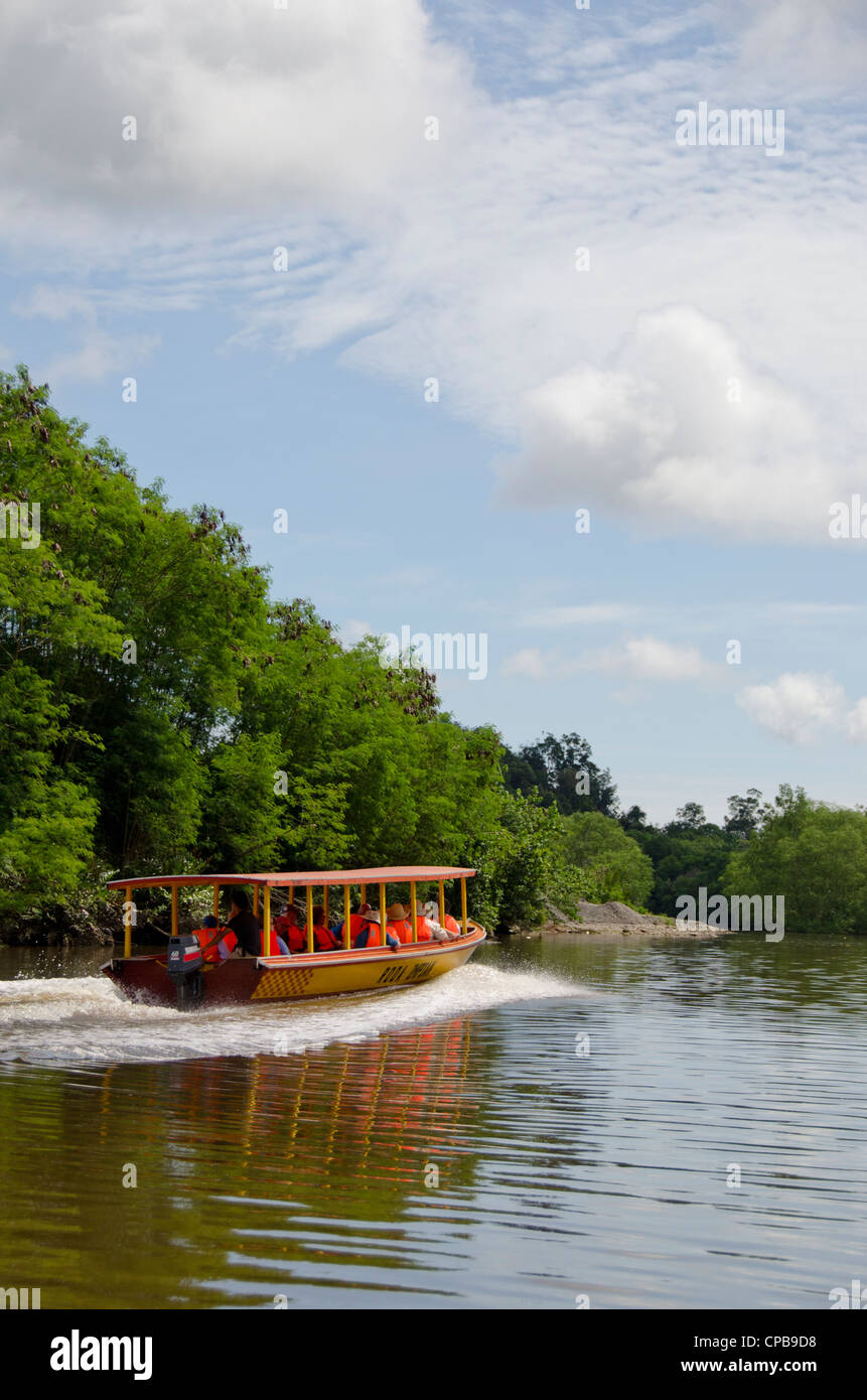 Borneo, Brunei. Dense mangrove forest along the Brunei river not far from the capital city of Bandar Seri Begawan. - Stock Image