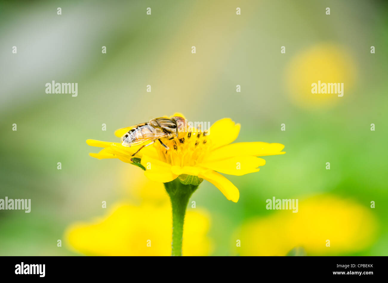 Fruit files or Flower files or hover files macro in green nature or in the garden - Stock Image