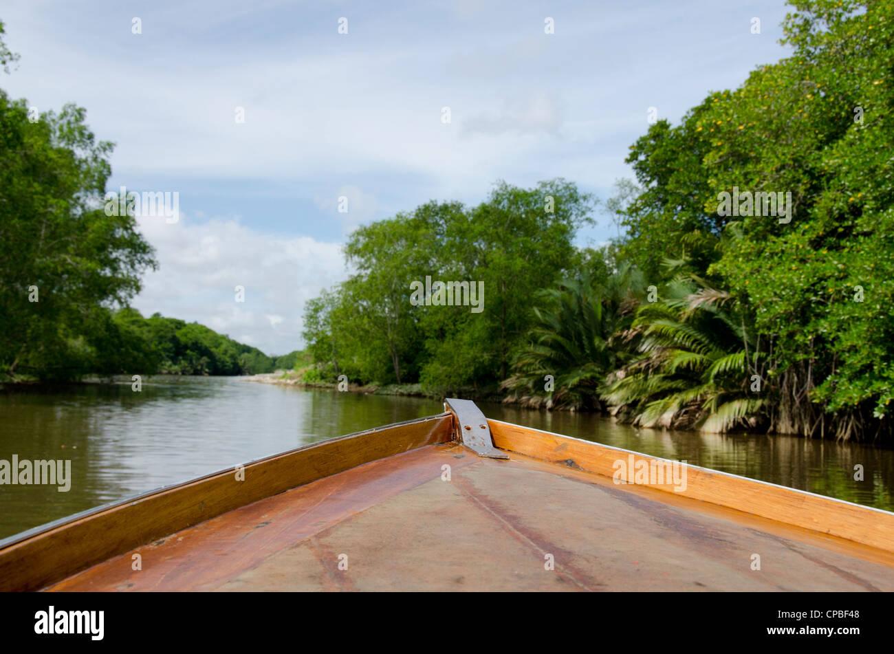 Southeast Asia, Borneo, Brunei. Dense mangrove forest along the Brunei river. - Stock Image