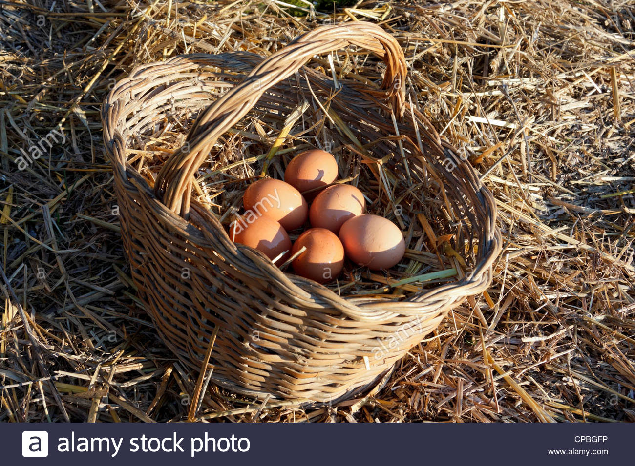 Fresh chicken eggs in a basket with straw - Stock Image